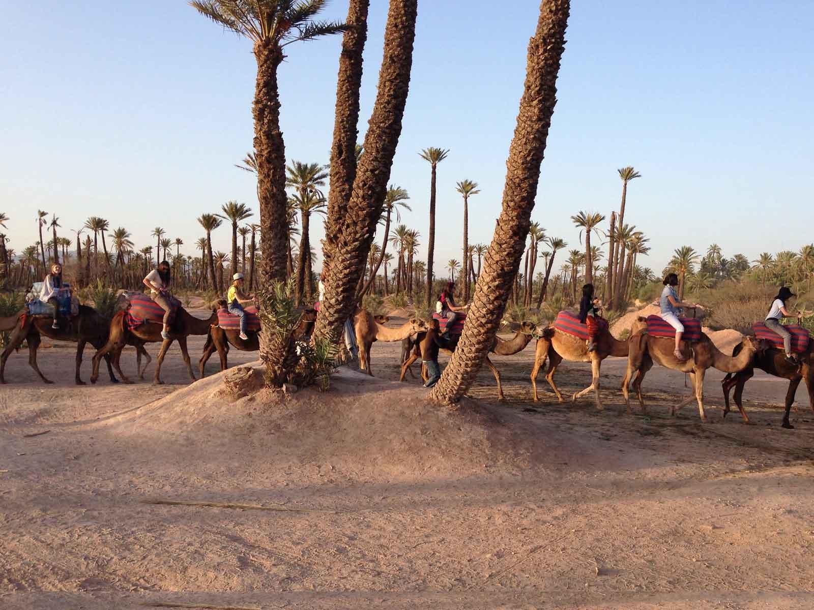 Day Camel Treks Marrakech