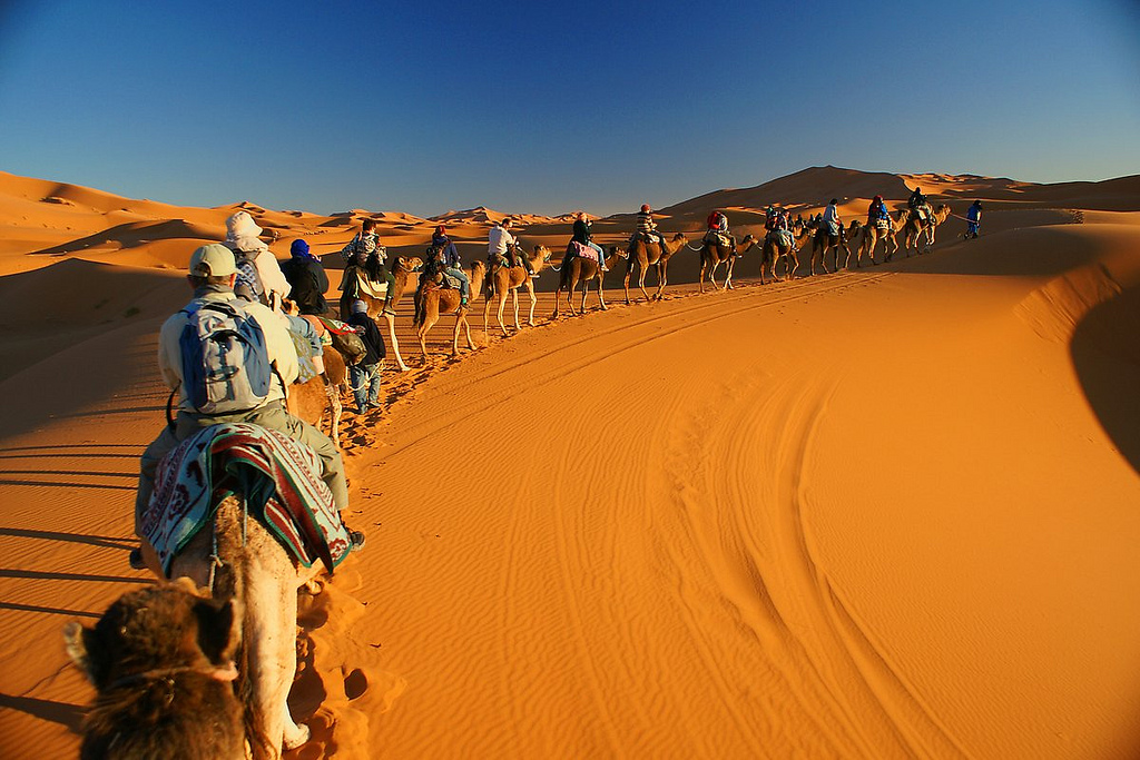 Discover the Moroccan Desert with camels