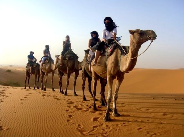 Discover the Moroccan Desert with camels -Camel Trek