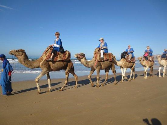 Essaouira Camel Trek