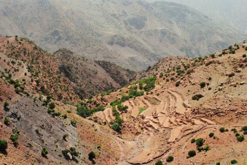 My Berber Friend Trek